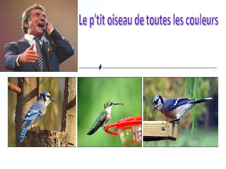 56-Le Ptit Oiseau De Tt Les Couleurs