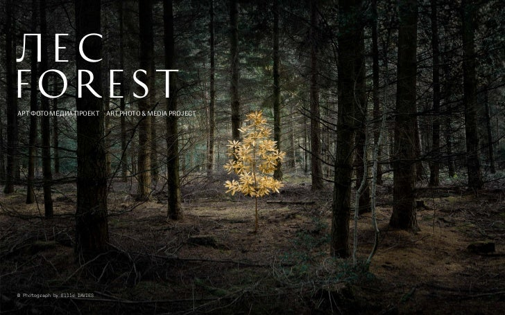 ПРОЕКТ   «ЛЕС»   FOREST   PROJECTЛЕСFORESTAРТ ФОТО МЕДИА ПРОЕКТ ART PHOTO & MEDIA PROJECT© Photograph by Ellie DAVIES