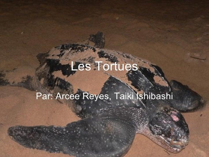Les Tortues Par: Arcee Reyes, Taiki Ishibashi