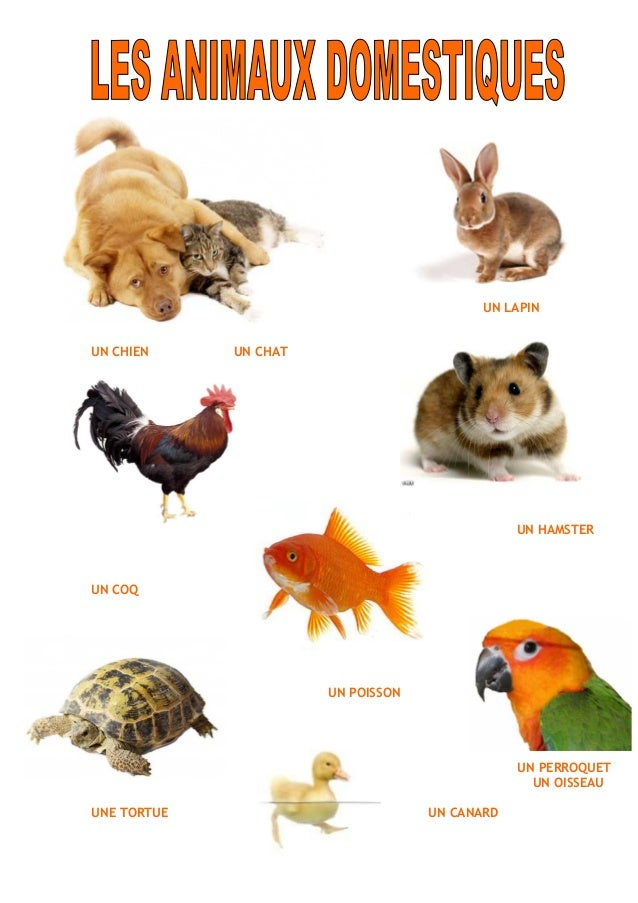 http://image.slidesharecdn.com/lesanimauxdomestiques-130302095940-phpapp02/95/les-animaux-domestiques-1-638.jpg?cb=1362240015