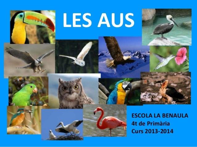 LES AUS  ESCOLA LA BENAULA 4t de Primària Curs 2013-2014