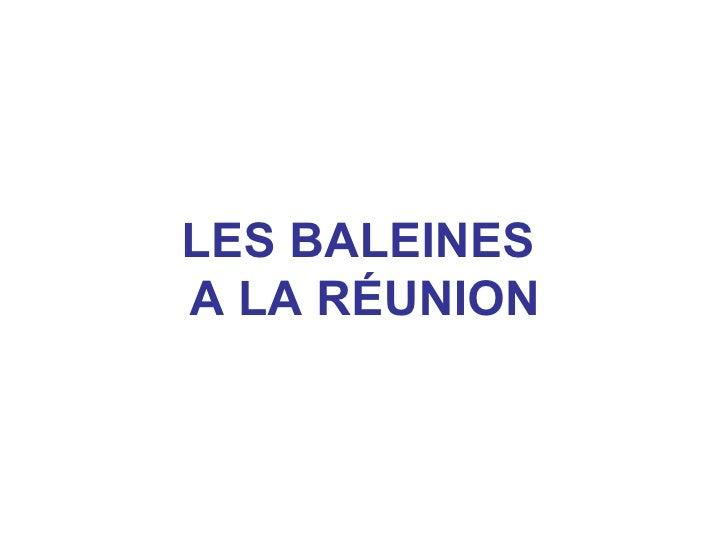 LES BALEINESA LA RÉUNION