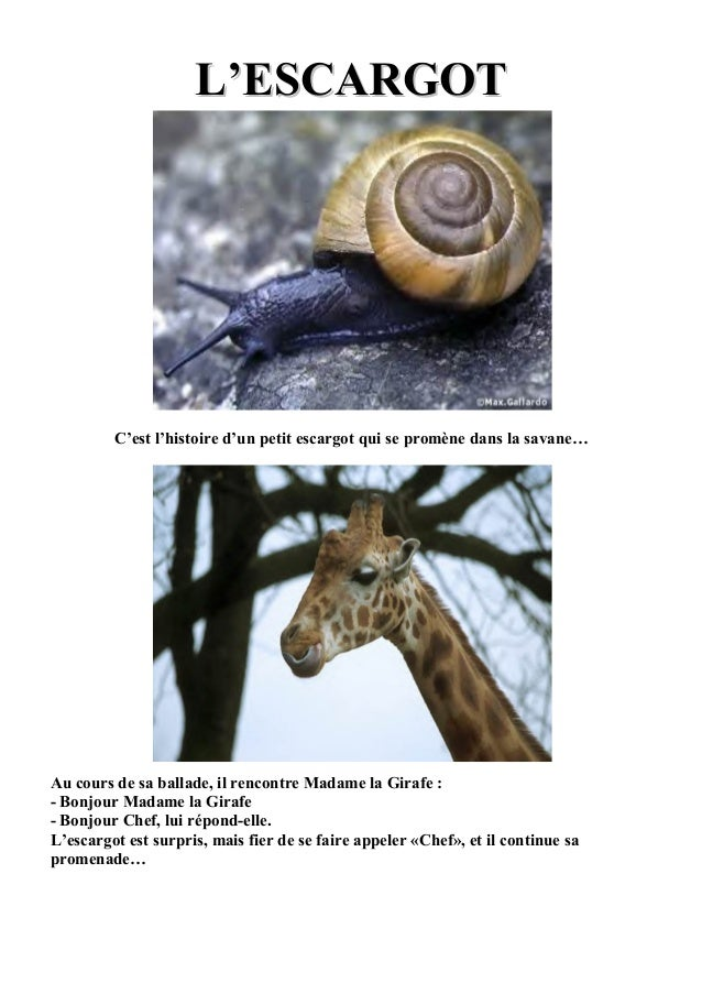 L'ESCARGOTL'ESCARGOT C'est l'histoire d'un petit escargot qui se promène dans la savane… Au cours de sa ballade, il rencon...