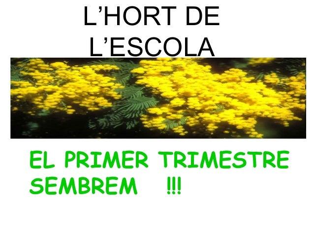 L'HORT DE L'ESCOLA EL PRIMER TRIMESTRE SEMBREM !!!