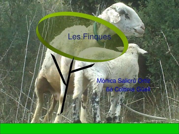 Les Finques       Mònica Salicrú Ortiz         6é Colònia Güell