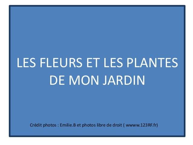 LES FLEURS ET LES PLANTES      DE MON JARDIN  Crédit photos : Emilie.B et photos libre de droit ( wwww.123RF.fr)