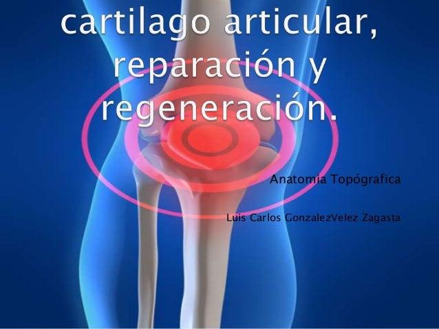 lesion cartilago articular: