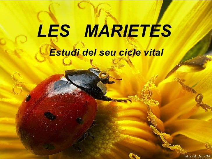 Les Marietes