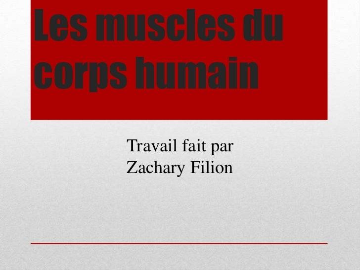 Les muscles du corps humain<br />Travail fait par <br />Zachary Filion<br />
