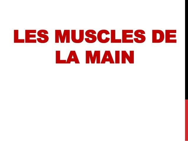 LES MUSCLES DE LA MAIN