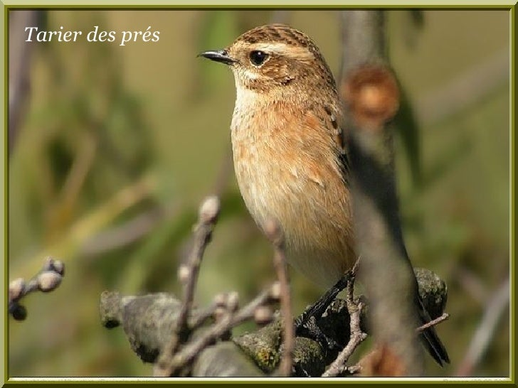 Les oiseaux de nos jardins frb for Oiseaux de nos jardins