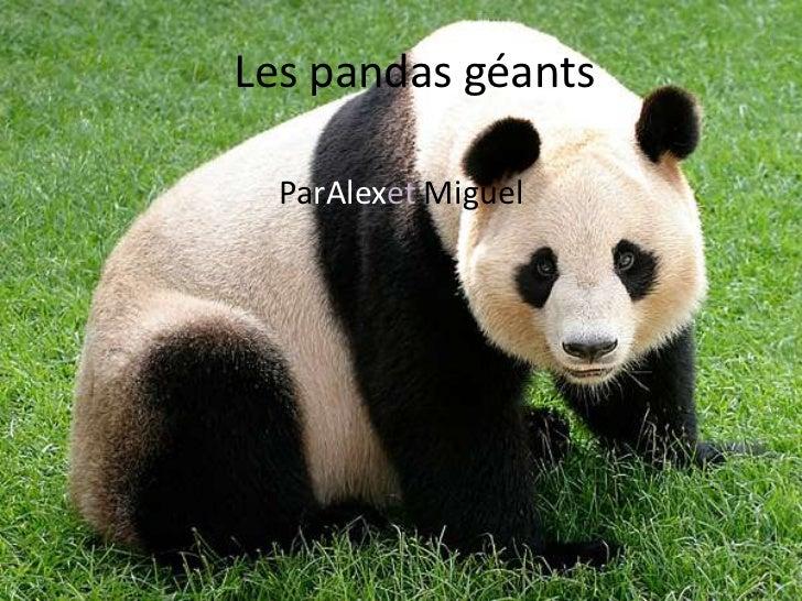 Les pandas géants  ParAlexet Miguel