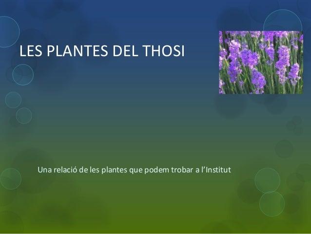 LES PLANTES DEL THOSI  Una relació de les plantes que podem trobar a l'Institut