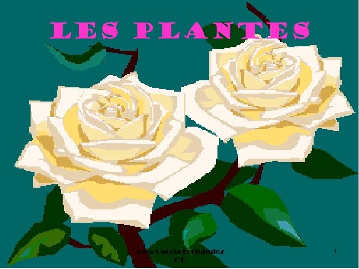 Les plantes   Sara García Fernández   1            1ºB