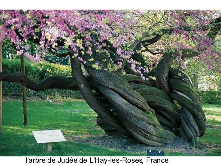Les plus beaux arbres du monde for Beaux arbres de jardin