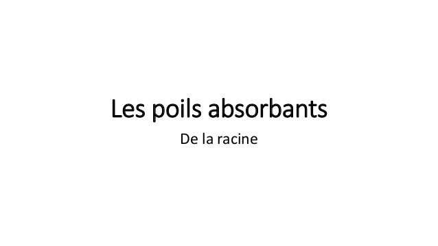 Les poils absorbants De la racine