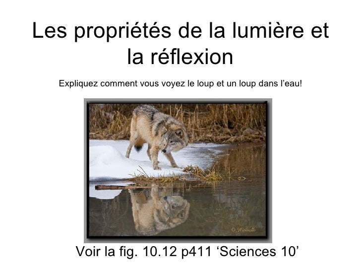 Les propriétés de la lumière et la réflexion Voir la fig. 10.12 p411 'Sciences 10' Expliquez comment vous voyez le loup et...