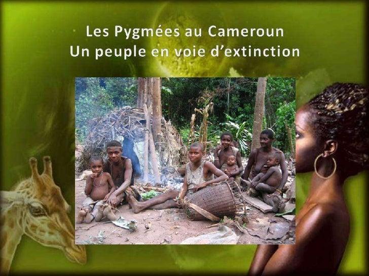 Les pygmées au cameroun.