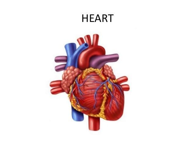 Lesson 11 Major Internal Organs
