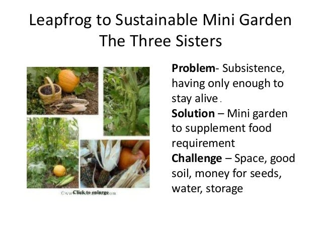 Leapfrog to Sustainable Mini Garden The Three Sisters Problem- Subsistence, having only enough to stay alive . Solution – ...