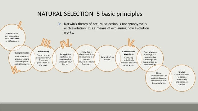 argument against evolution by natural selection Natural theology included a range of ideas and arguments from the outset, and when darwin's theory was published, ideas of theistic evolution were presented in which evolution is accepted as a secondary cause open to scientific investigation, while still holding belief in god as a first cause with a non-specified role in guiding evolution and creating humans.