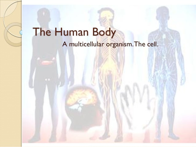 The Human Body A multicellular organism.The cell.