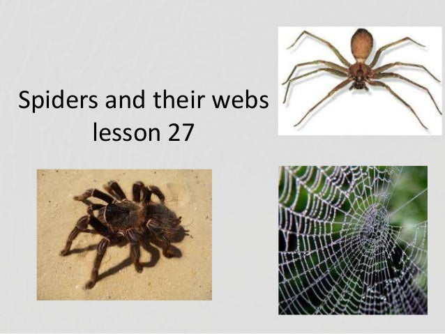 Lesson 27 spiders and their webs