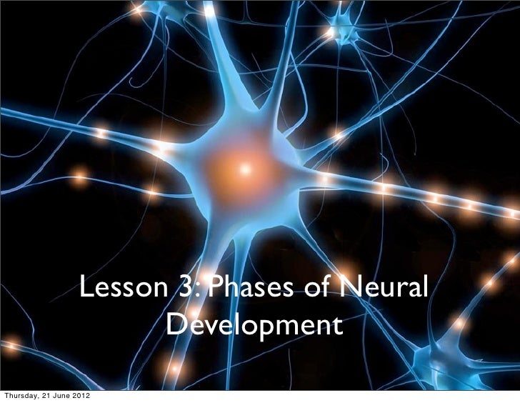 PHASES OF NEURAL DEVELOPMENT IN                            LEARNING                   Lesson 3: Phases of Neural          ...