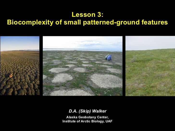 Lesson 3:Biocomplexity of small patterned-ground features                   D.A. (Skip) Walker                  Alaska Geo...