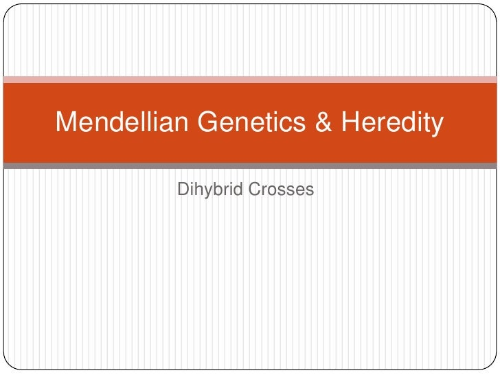 Mendellian Genetics & Heredity         Dihybrid Crosses