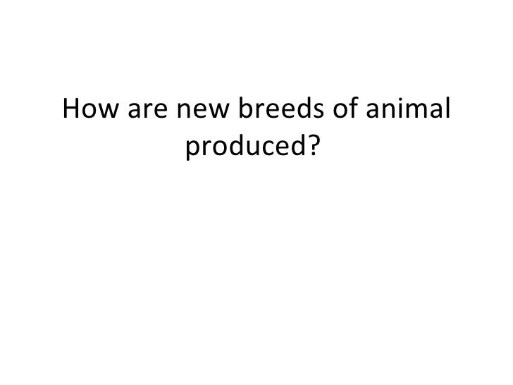How are new breeds of animal produced?
