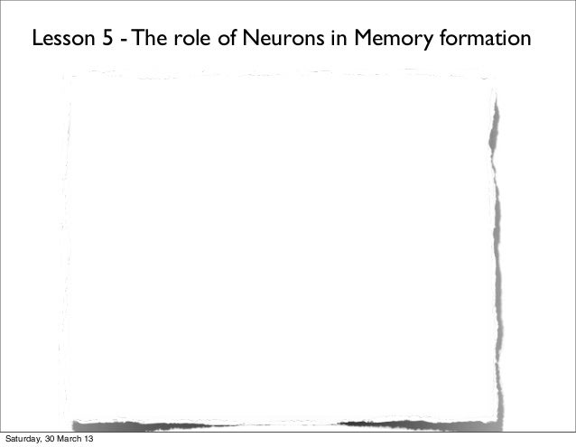 Lesson 5 - The role of Neurons in Memory formationSaturday, 30 March 13