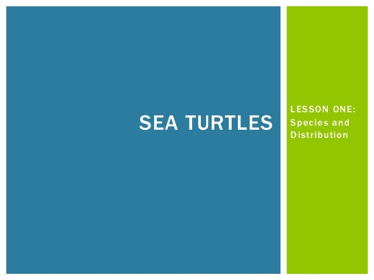 LESSON ONE:SEA TURTLES   Species and              Distribution