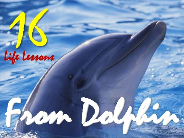 Life Lessons 16 From Dolphin