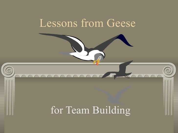 Lessons from Geese for Team Building