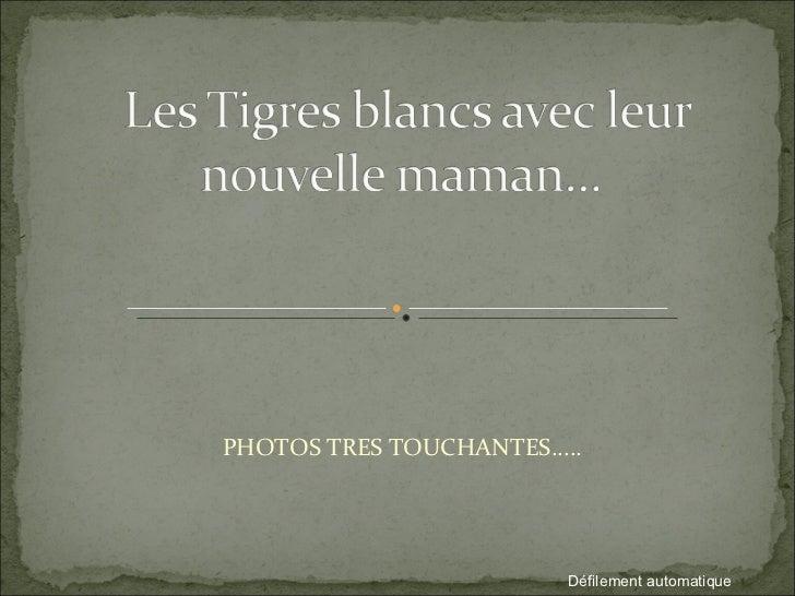 PHOTOS TRES TOUCHANTES..... Défilement automatique