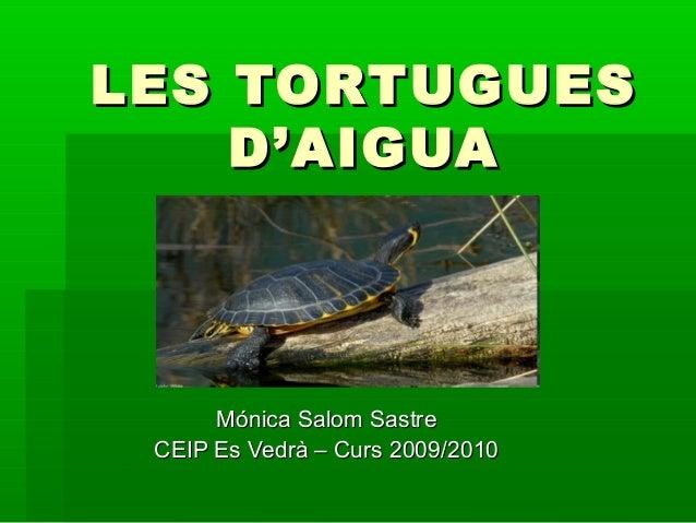 Les tortugues d'aigua