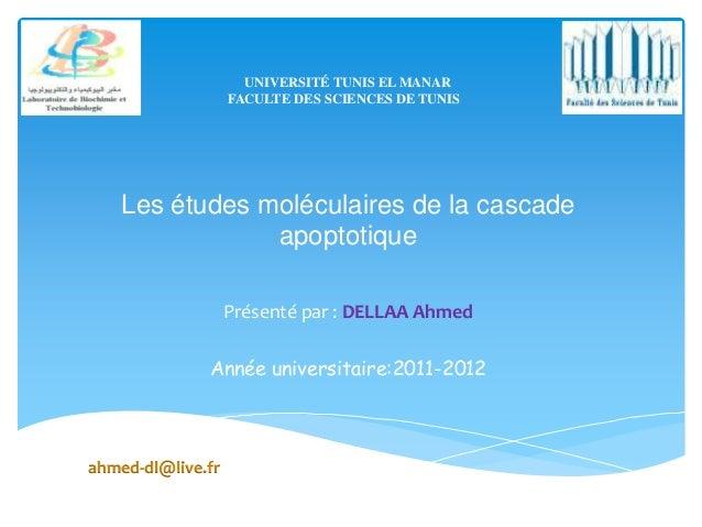 UNIVERSITÉ TUNIS EL MANAR                   FACULTE DES SCIENCES DE TUNIS   Les études moléculaires de la cascade         ...