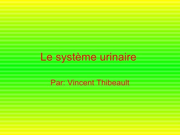 Le système urinaire   Par: Vincent Thibeault