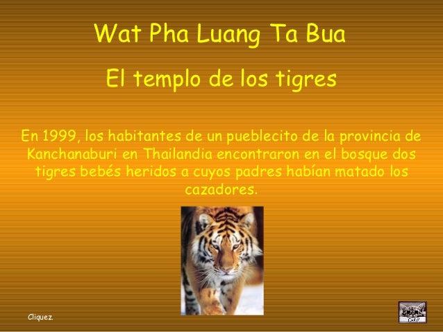 Wat Pha Luang Ta Bua            El templo de los tigresEn 1999, los habitantes de un pueblecito de la provincia de Kanchan...