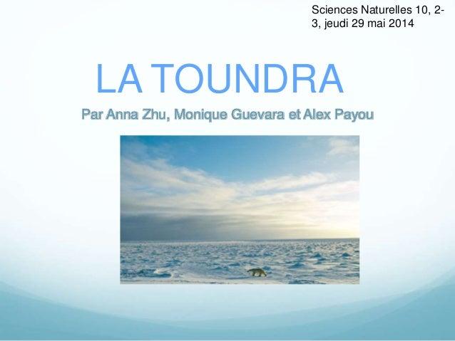 LA TOUNDRA Par Anna Zhu, Monique Guevara et Alex Payou Sciences Naturelles 10, 2- 3, jeudi 29 mai 2014