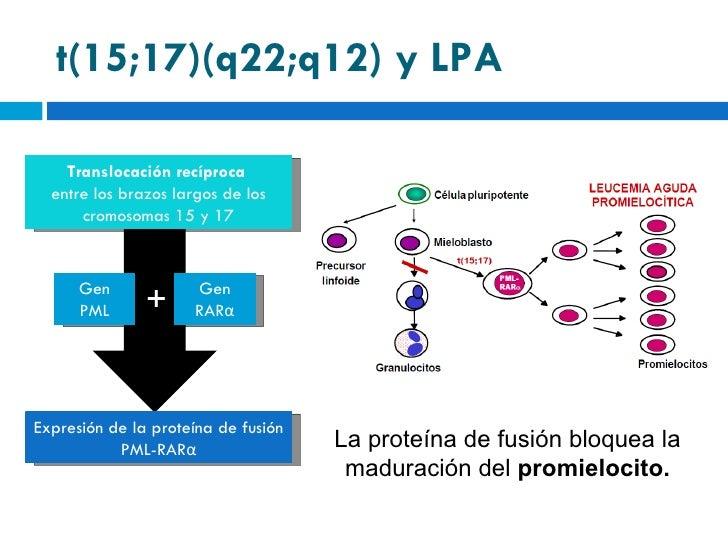 Pml Proteina Pml-rar α la Proteína de