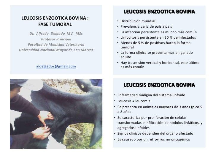 Leucosis bovina