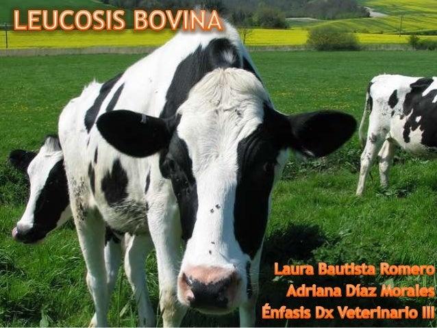Leucosis bovina   Infección Permanente    VLB (Retrovirus)70 % del Ganado     Clínicamente   infectado            Sanos   ...