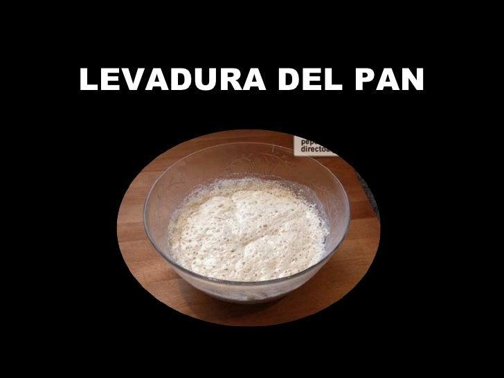 LEVADURA DEL PAN