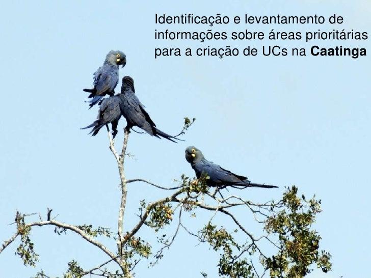 Identificação e levantamento de<br />informações sobre áreas prioritárias <br />para a criação de UCs na Caatinga<br />