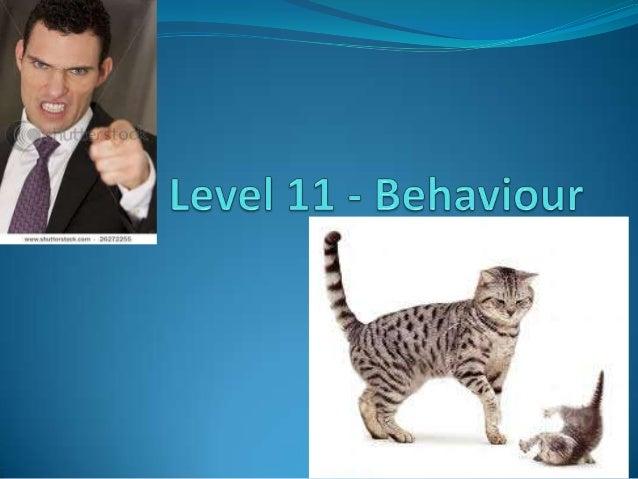 Level 11   behaviour