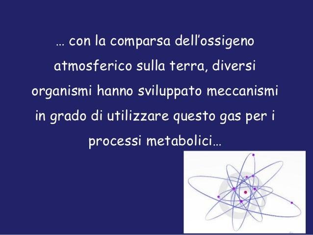 … con la comparsa dell'ossigeno   atmosferico sulla terra, diversiorganismi hanno sviluppato meccanismiin grado di utilizz...
