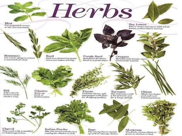 Image Gallery Herbs Meaning