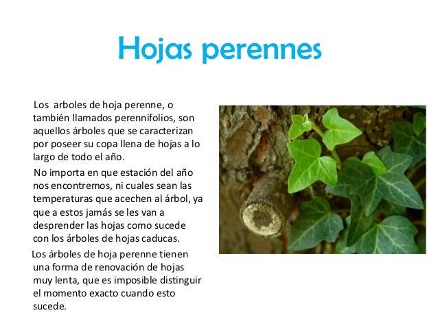 Clasificacion de las hojas for Arboles hoja caduca y perenne